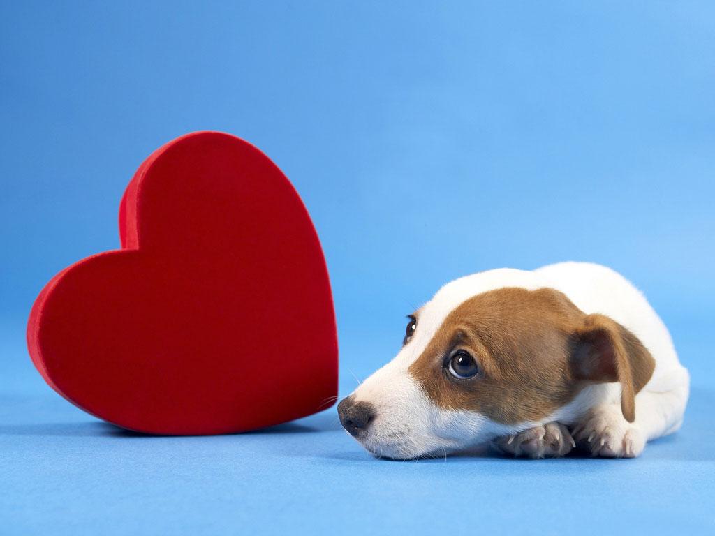 Pode alguém morrer de amor?