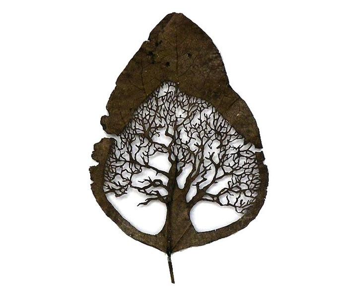 Arte em folhas de árvores 04