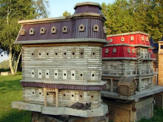 As incríveis casas de pássaros de John Looser 09