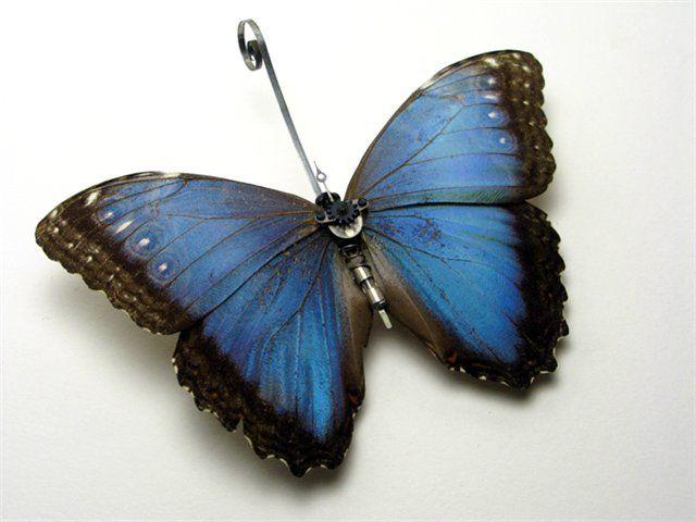 Os insetos mecânicos de Mike Libby 16