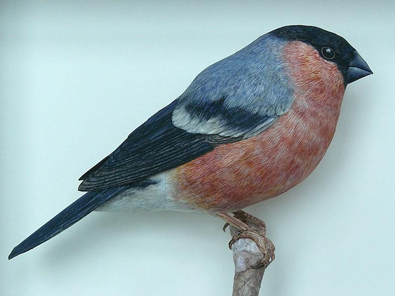 Artista incríveis pássaros realistas em papercraft 04