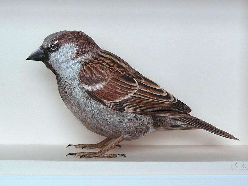Artista incríveis pássaros realistas em papercraft 05