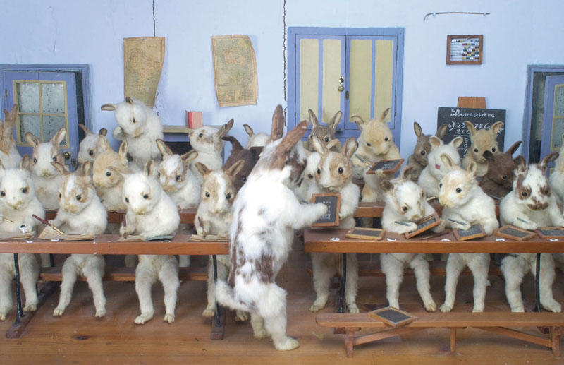 A curiosa e mórbida arte do taxidermista Walter Potter 19
