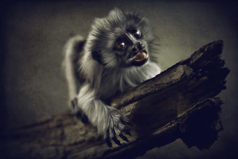 50 dos animais exóticos mais bonitos da Terra 01
