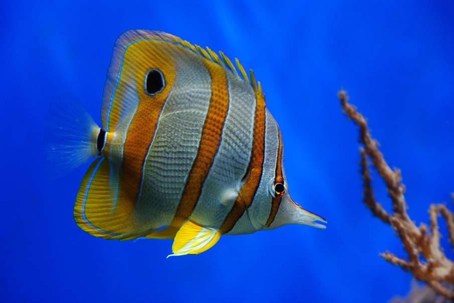 50 dos animais exóticos mais bonitos da Terra 02