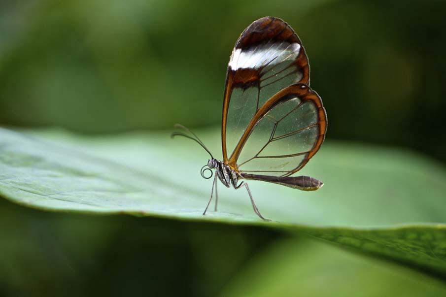 50 dos animais exóticos mais bonitos da Terra 03