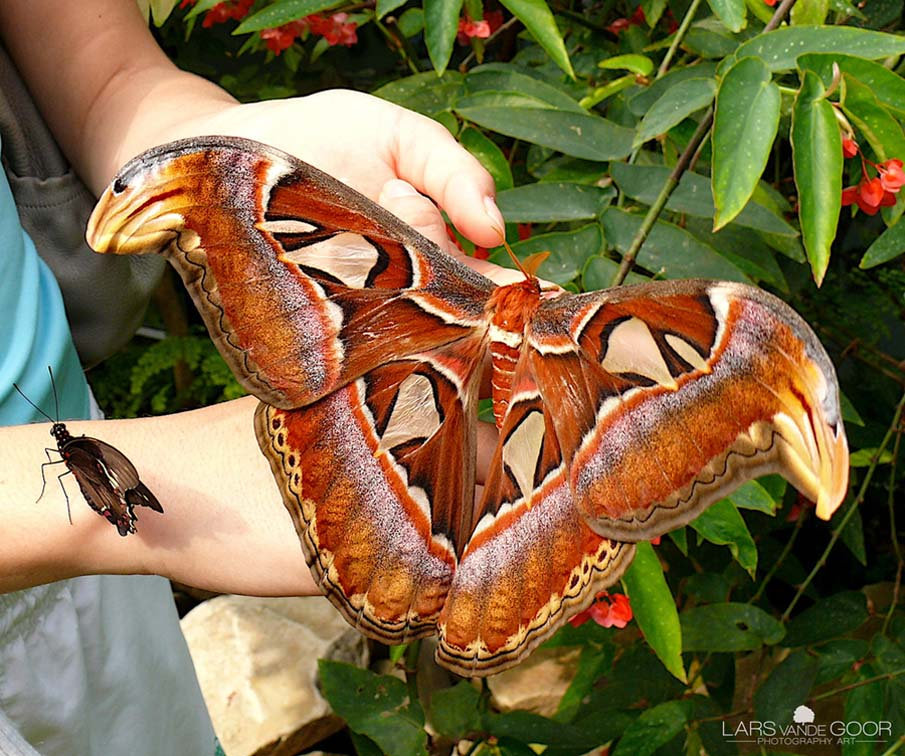 50 dos animais exóticos mais bonitos da Terra 04