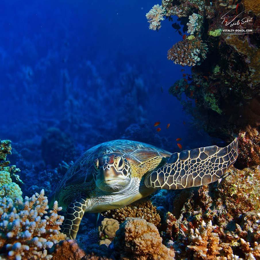 50 dos animais exóticos mais bonitos da Terra 06