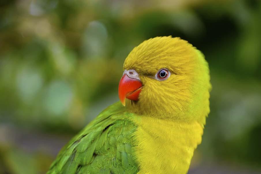 50 dos animais exóticos mais bonitos da Terra 07