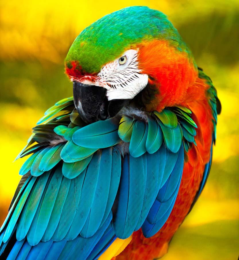 50 dos animais exóticos mais bonitos da Terra 08