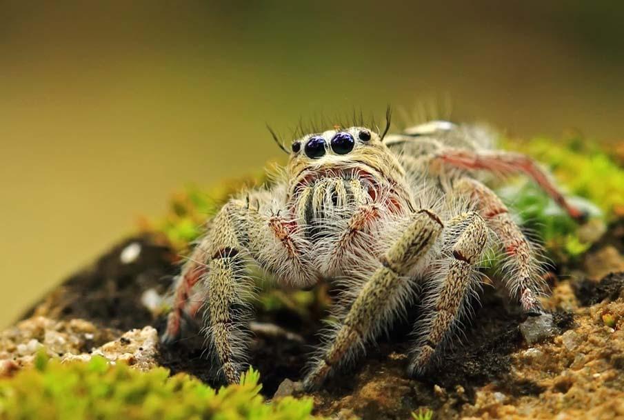 50 dos animais exóticos mais bonitos da Terra 09
