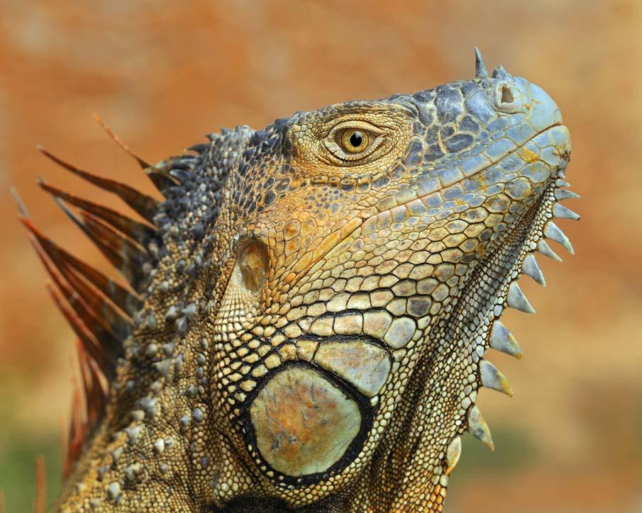 50 dos animais exóticos mais bonitos da Terra 11