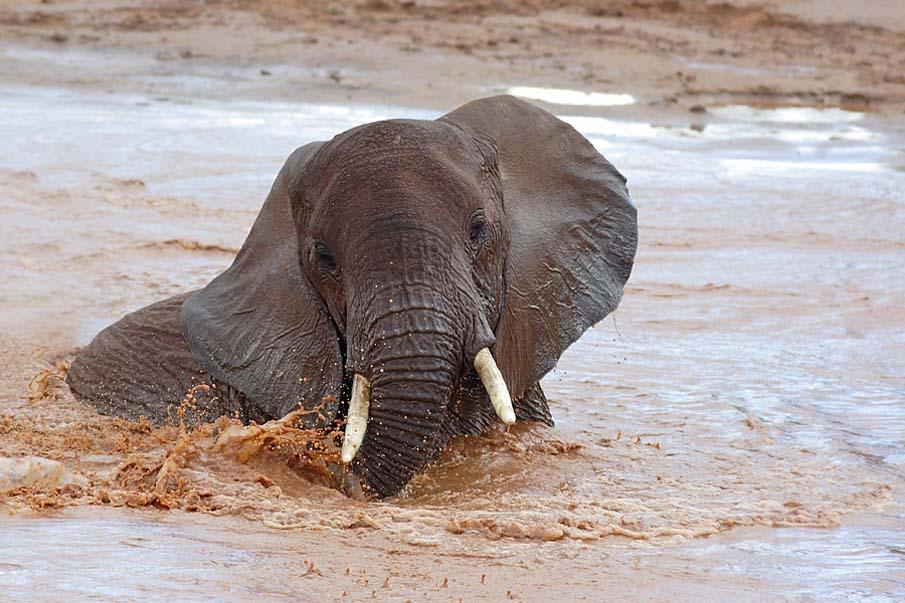 50 dos animais exóticos mais bonitos da Terra 14