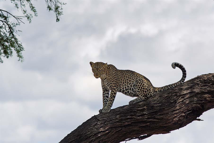 50 dos animais exóticos mais bonitos da Terra 16