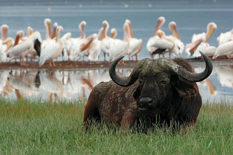 50 dos animais exóticos mais bonitos da Terra 17