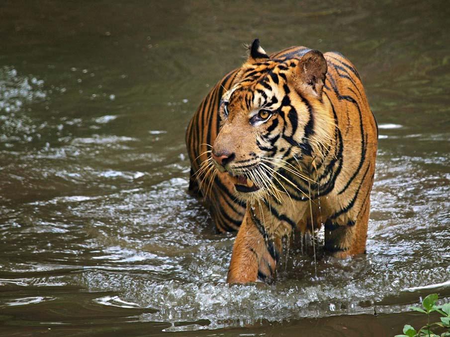 50 dos animais exóticos mais bonitos da Terra 18