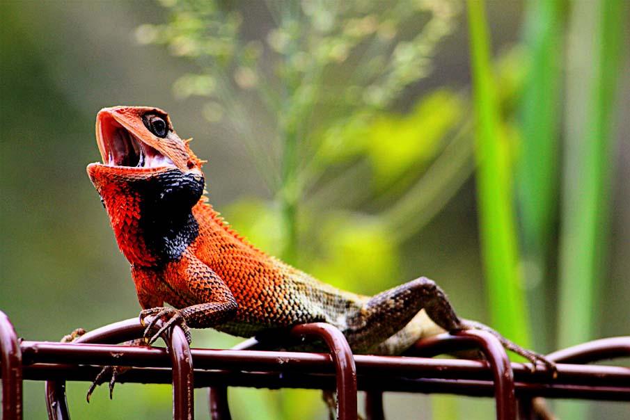 50 dos animais exóticos mais bonitos da Terra 19