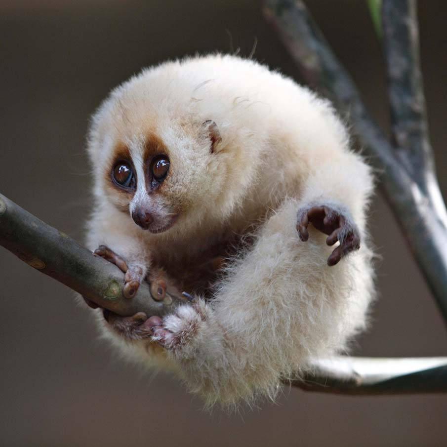 50 dos animais exóticos mais bonitos da Terra 21