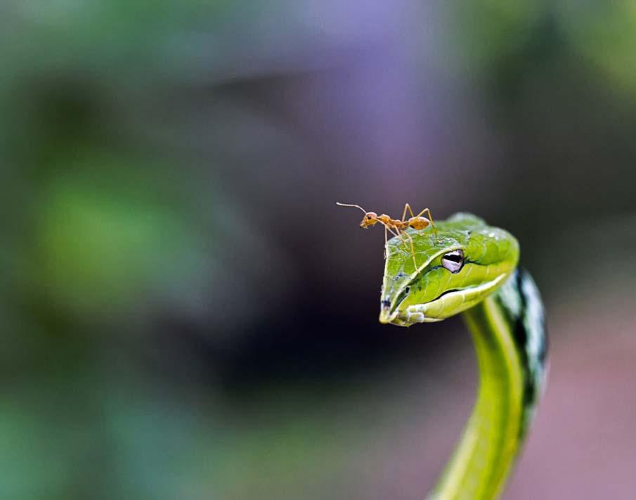 50 dos animais exóticos mais bonitos da Terra 22