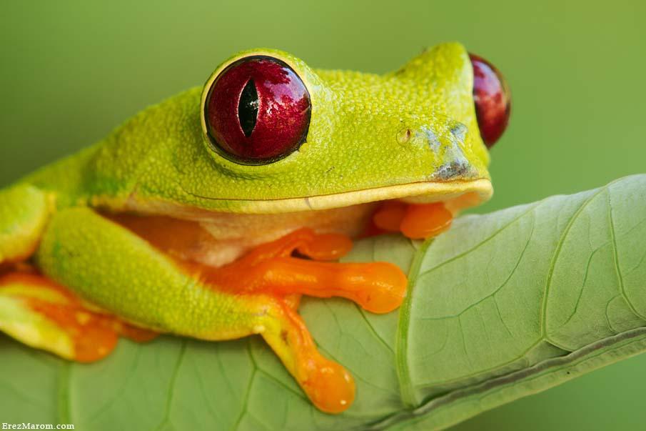 50 dos animais exóticos mais bonitos da Terra 26