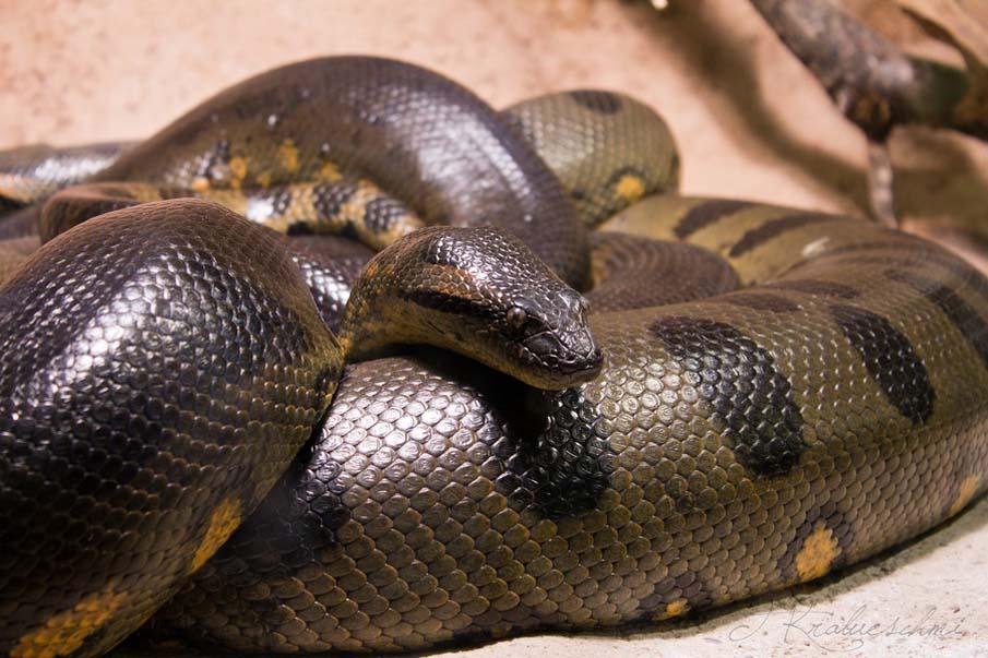 50 dos animais exóticos mais bonitos da Terra 29