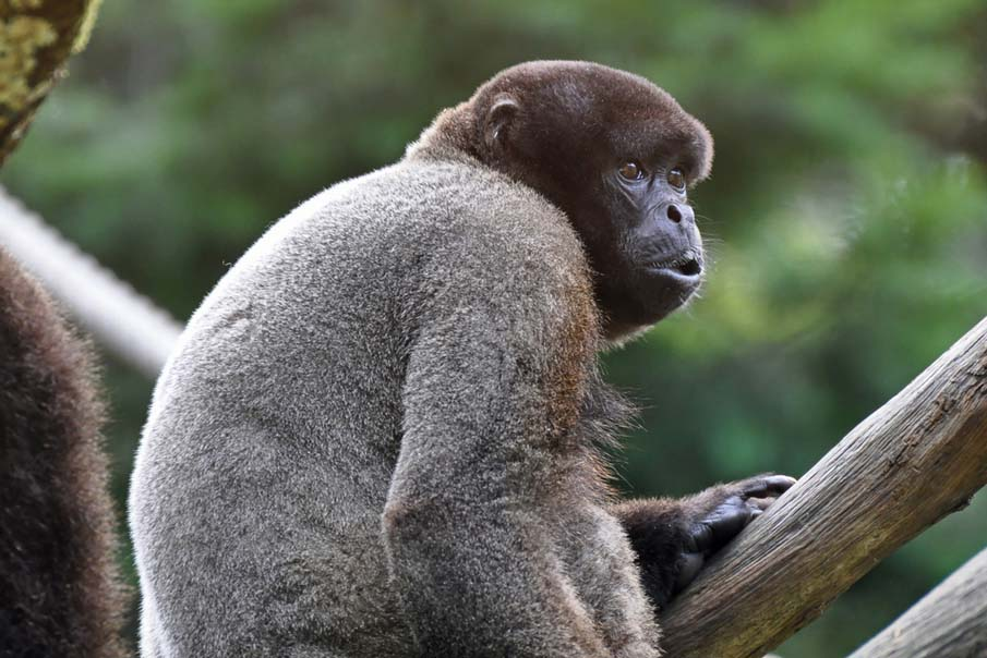 50 dos animais exóticos mais bonitos da Terra 30