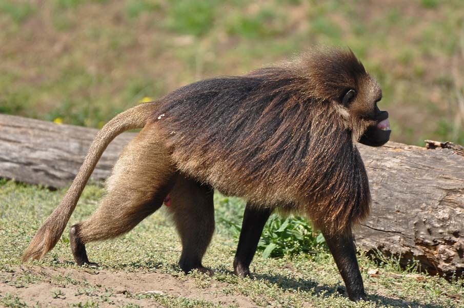 50 dos animais exóticos mais bonitos da Terra 31
