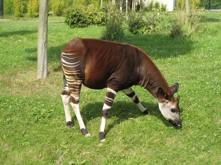 50 dos animais exóticos mais bonitos da Terra 32