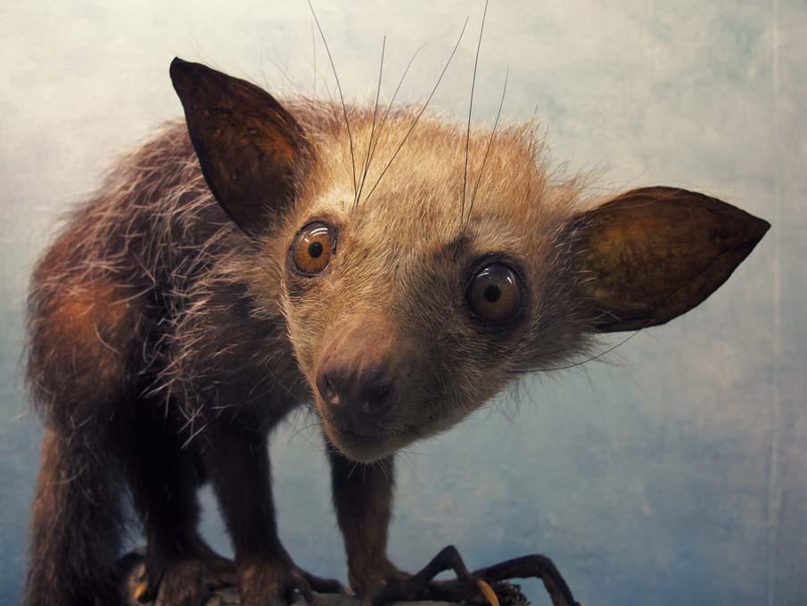 50 dos animais exóticos mais bonitos da Terra 33