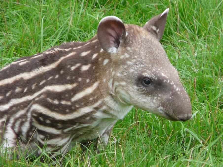 50 dos animais exóticos mais bonitos da Terra 38
