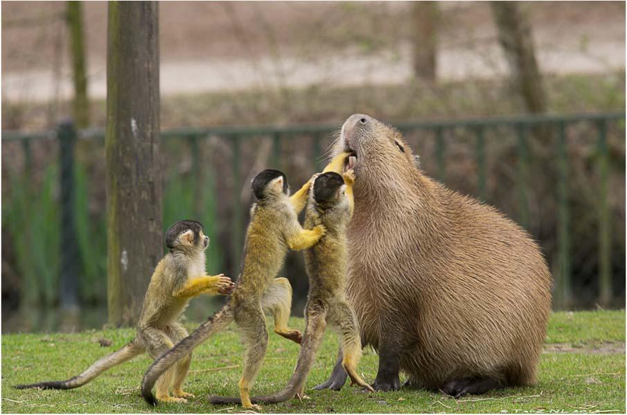50 dos animais exóticos mais bonitos da Terra 39