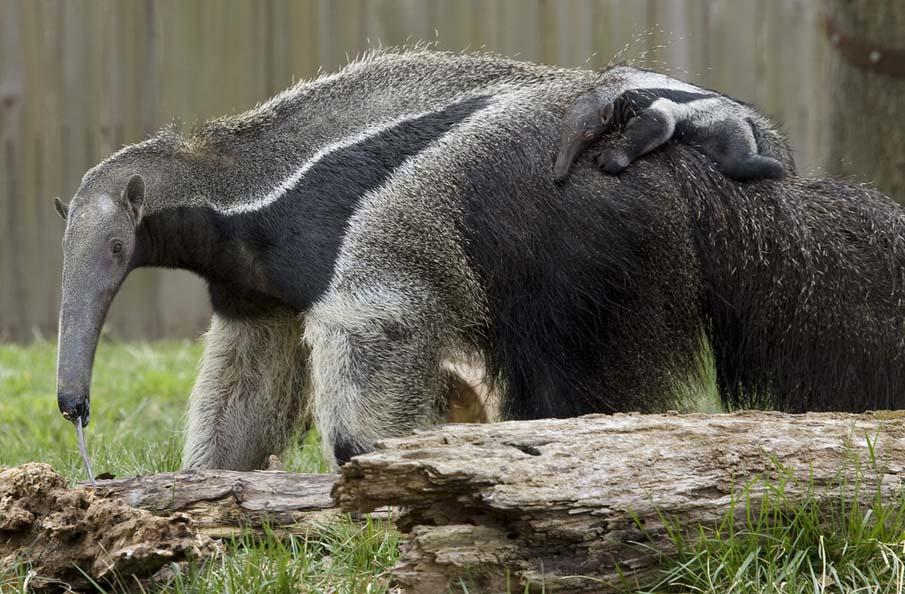 50 dos animais exóticos mais bonitos da Terra 40