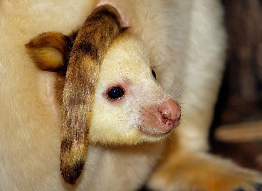 50 dos animais exóticos mais bonitos da Terra 41