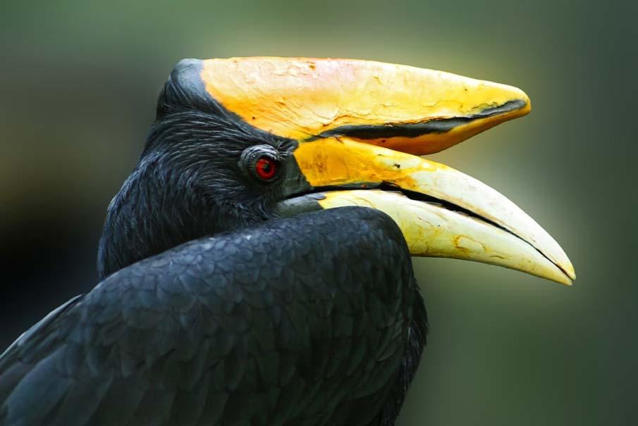 50 dos animais exóticos mais bonitos da Terra 42
