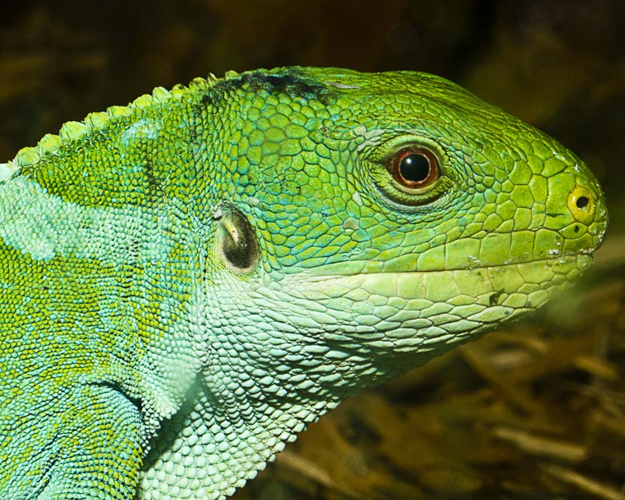 50 dos animais exóticos mais bonitos da Terra 43