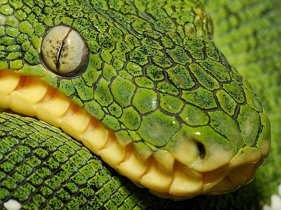 50 dos animais exóticos mais bonitos da Terra 44