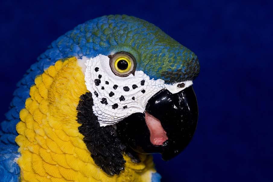 50 dos animais exóticos mais bonitos da Terra 45