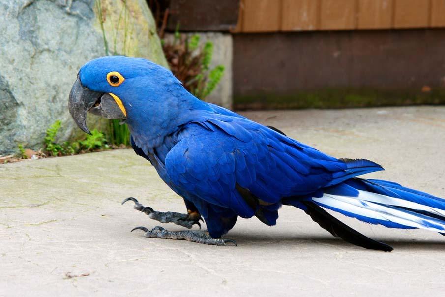 50 dos animais exóticos mais bonitos da Terra 46