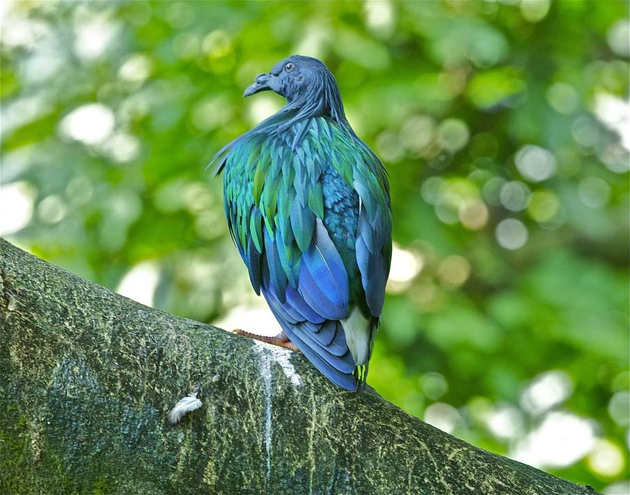 50 dos animais exóticos mais bonitos da Terra 47