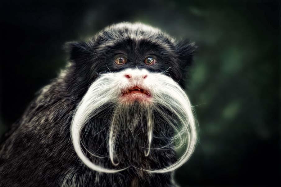 50 dos animais exóticos mais bonitos da Terra 48