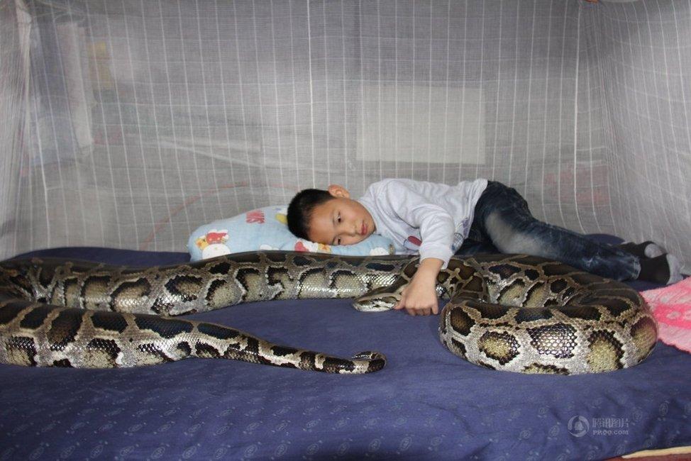 Garoto chinês vive e dorme com um Píton enorme há 13 Anos 01