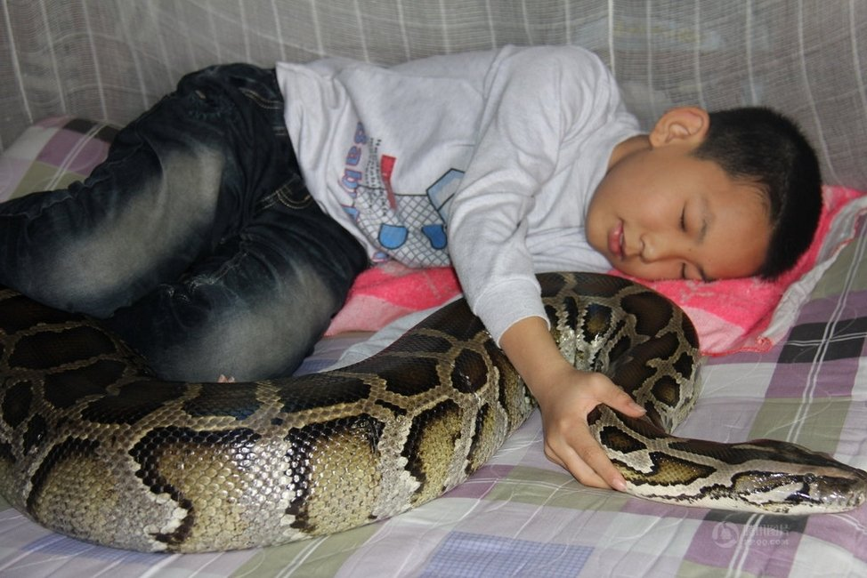 Garoto chinês vive e dorme com um Píton enorme há 13 Anos 03