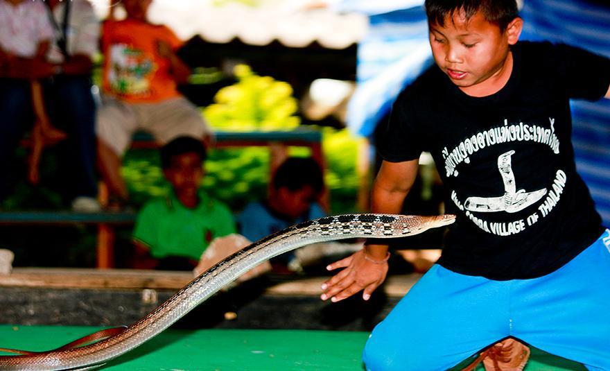 Vila das Cobras na Tailândia, onde homens e cobras vivas em harmonia 01