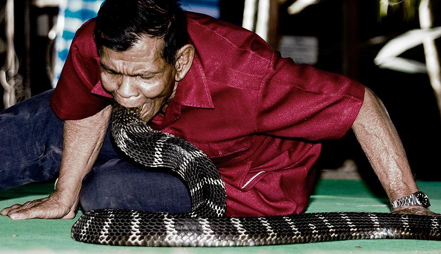 Vila das Cobras na Tailândia, onde homens e cobras vivas em harmonia 02