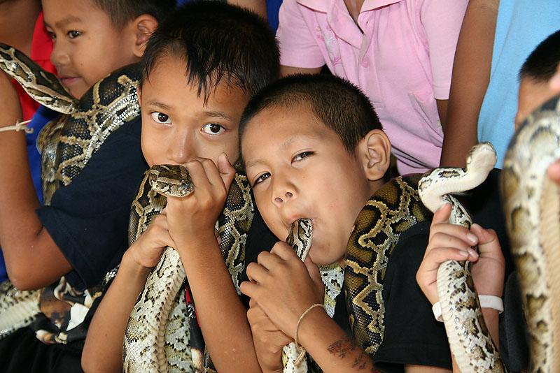 Vila das Cobras na Tailândia, onde homens e cobras vivas em harmonia 03