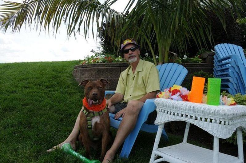 A história do pitbull Patrick e Spangles, o gato vesgo 22