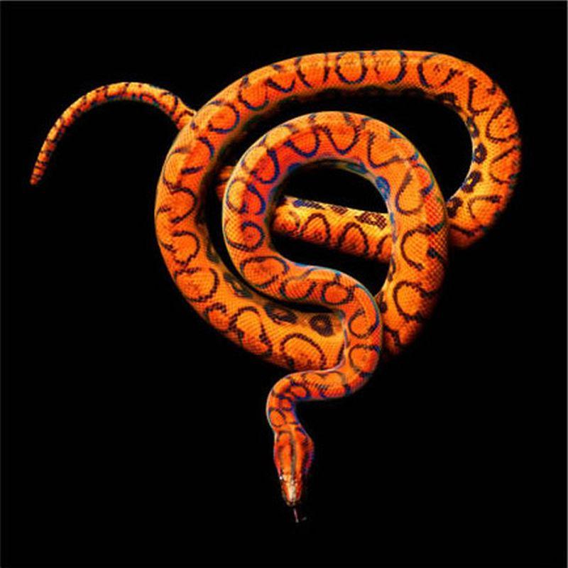 Serpentine, uma série peçonhenta 08