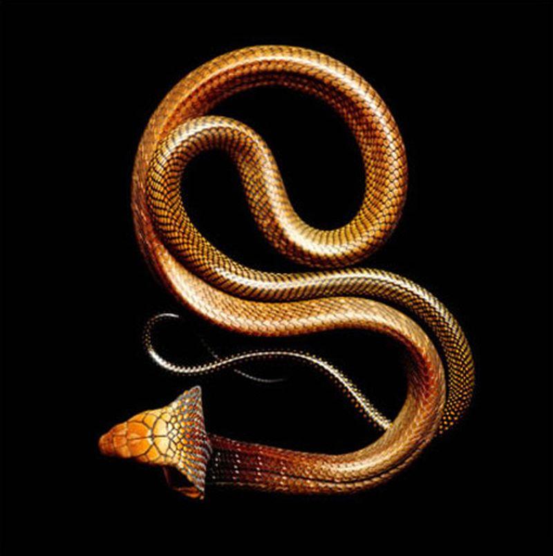 Serpentine, uma série peçonhenta 10