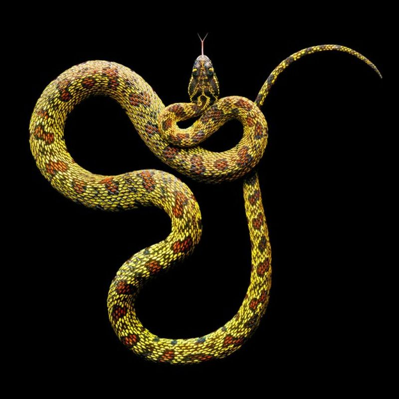 Serpentine, uma série peçonhenta 16