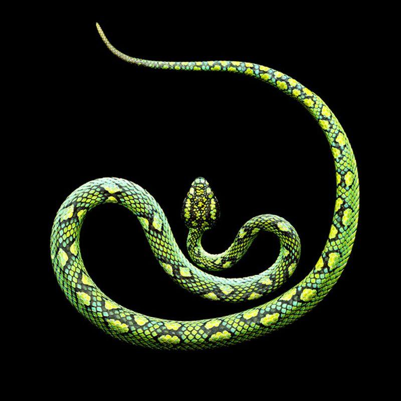 Serpentine, uma série peçonhenta 28